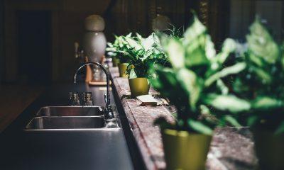 welke plant in de keuken